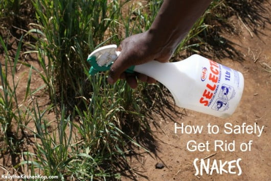 How to get rid of snakes safely