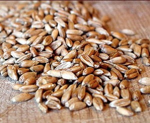 spelt-grain1-300x247