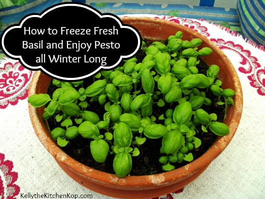 How to Freeze Fresh Basil potted