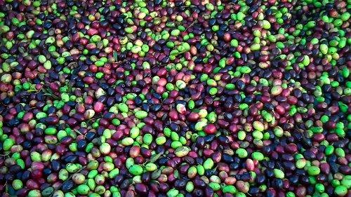 olives-2