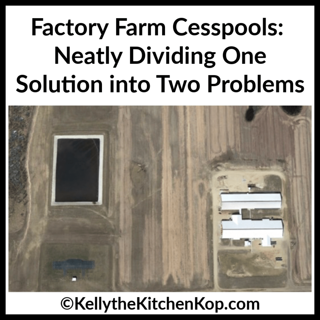 factory farm cesspools